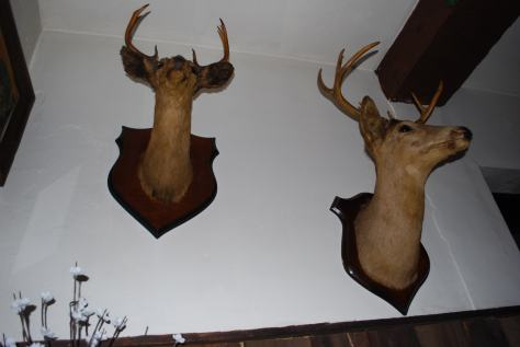 If you find taxidermy offensive, you should probably not visit Westline Inn.
